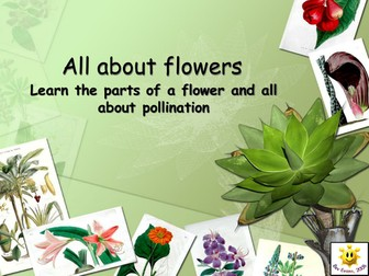 Plants: Flowers and Pollination PowerPoint