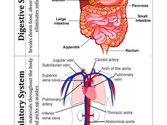 Tissues, Organs and Organ Systems