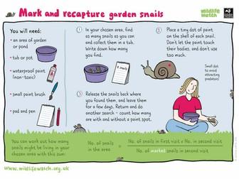 Mark and recapture garden snails