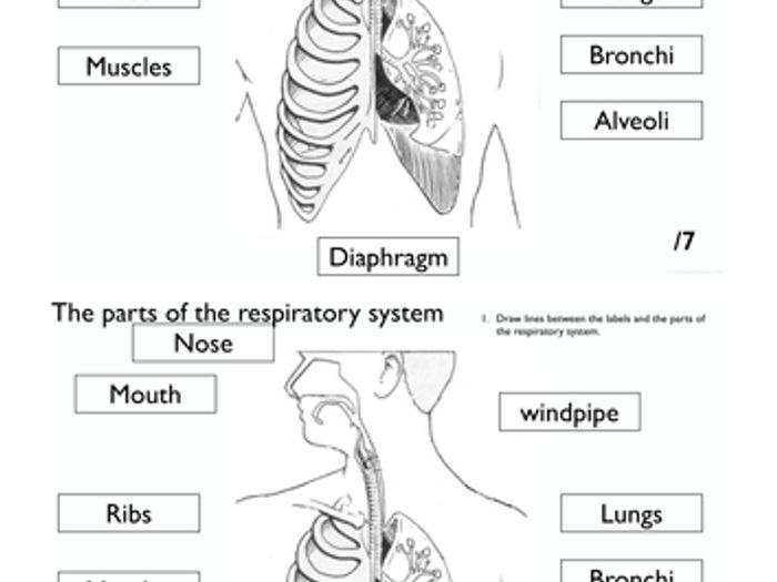 Printable respiratory diagram complete wiring diagrams respiratory system worksheet pack by rahmich teaching resources tes rh tes com upper respiratory diagram digestive ccuart Choice Image