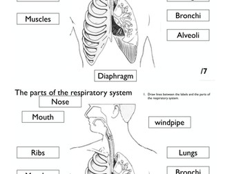 respiratory system diagram ppt image collections how to guide and refrence. Black Bedroom Furniture Sets. Home Design Ideas