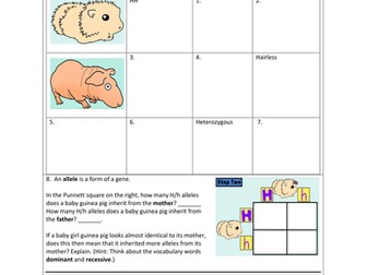 Monohybrids and the Punnett Square Guinea Pigs