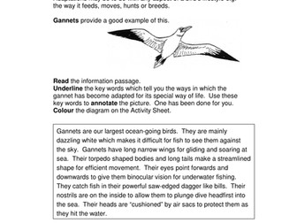Adaptation - Seabirds and Seals