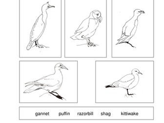 Seabird Classification