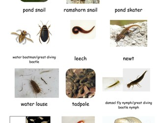pond indentification sheet
