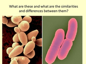 Yeast and Bacteria, Diffusion and Osmosis