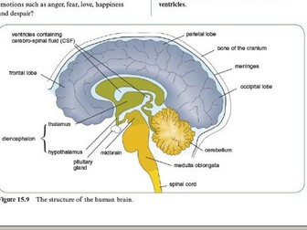 Heart rate control the brain by lcork99 teaching resources tes the brain and the mammalian nervous system ccuart Image collections