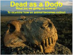 Lesson 2 - Species Extinction (Lesson 2 of 8)