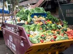Food Waste - The world's dumbest problem