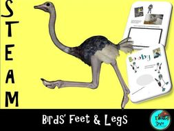STEAM - Biomimicry for Young Children - Birds' Feet and Legs