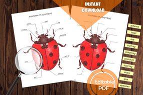 pdf_ladybugedu.zip