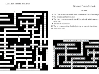 5. DNA and Protein Synthesis Crossword: Text Documents and Interactive Webpages