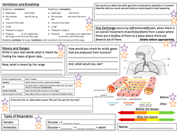 Breathing and Respiration Revision Placemat