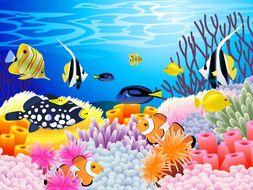 Coral Reef: Food Webs