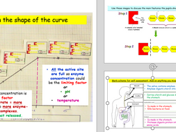 Digestive system and enzyme function and graphs