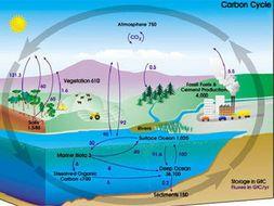 CB9 Edexcel: Lesson 11 - carbon cycle