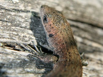 Lizards: Animals: Photo Collection (Part One)