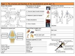 GCSE PE – AQA (9-1) – Musculoskeletal System Part 1 - Knowledge Retrieval/Revision Mat