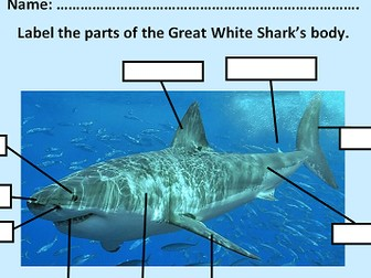 Ks1 2 Label The Parts Of The Great White Shark Teaching Resources