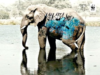 Traficantes de Especies (Endangered Species Trafficking)