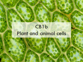 CB1bii: plant and animal cells