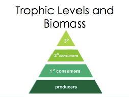 trophic levels and biomass by tuitionkit teaching resources tes