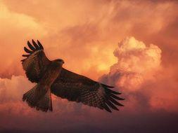 'Hawk Roosting' Poem (Ted Hughes) Comprehension Questions