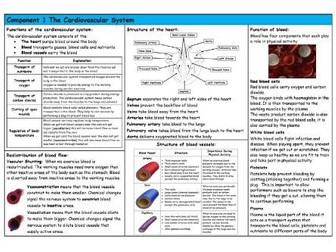 GCSE PE – Edexcel (9-1) – Cardiovascular System - Knowledge Organiser/Revision Mat