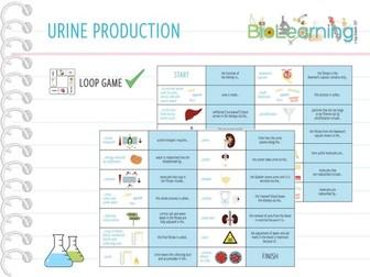 Urine production - Loop Game (KS4/KS5)
