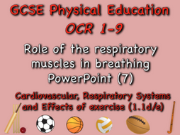 GCSE OCR PE (1.1d/e) - Role of respiratory muscles in breathing PowerPoint