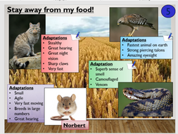 KS4 B15.4 Competition in animals | Teaching Resources