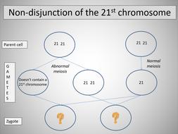 Chromosome mutations (OCR A-level Biology)