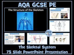 AQA GCSE PE - The Skeletal System