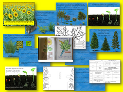 Plant Structure, Function and Classification Presentation and  Student Interactive Notebook Lesson