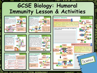 A Level Biology Humoral Immunity Lesson & Activities