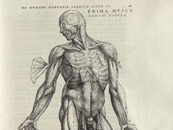 Medicine in the Renaissance