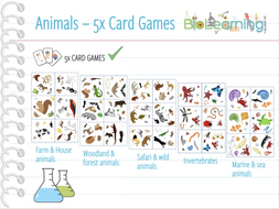 Animals - 5x Card games