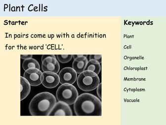 KS3 Cells - Lesson 2 - Plant Cells