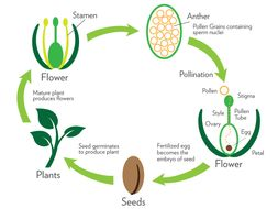 Plants and their Reproduction