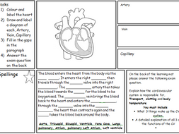 Learning Mat on the CV system and the Heart