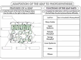 GCSE Photosynthesis Topic Worksheets