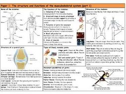 GCSE PE – AQA (9-1) – Musculoskeletal System (Part 1) - Knowledge Organiser/Revision Mat