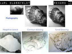 Record - observational drawing and photography based on the work of Karl Blossfeldt.