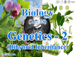 3.7.1 Genetics 2 - Dihybrid Inheritance