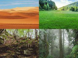 Grade 4/Habitats, Ecosystems and Communities