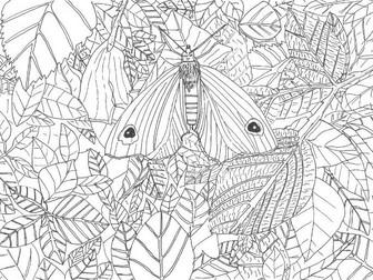 Habitats: Butterflies and Moths