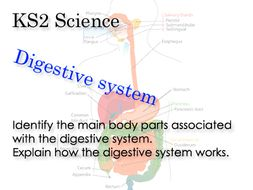 Science--How-the-digestive-system-works.pptx