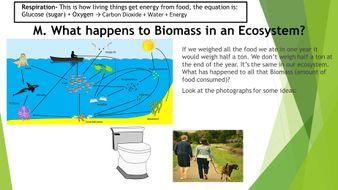 Ecology-Game-Land-Use.pptx