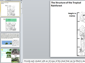 Rainforest Structure Carousel Activity