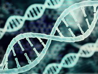 Year 8 Biology Bundle